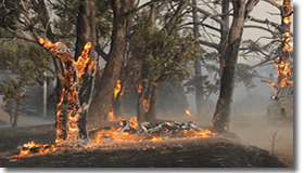Fire Recovery Project