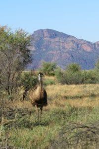 Jeremy Stewart - Emu