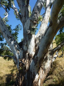 Nest box installed on a tree at Alexandra