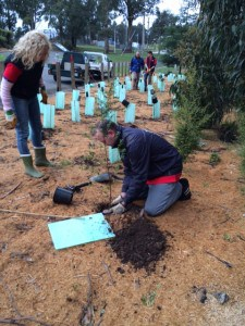 CUB volunteers planting at the Kinglake Lions Park.