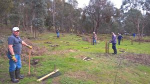 ANZ volunteers planting at Murrindindi