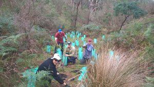 NAB volunteers planting at Junction Hill.