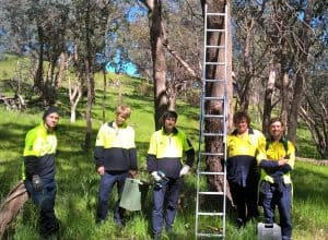 Installing nest boxes at Mt Pleasant Reserve.