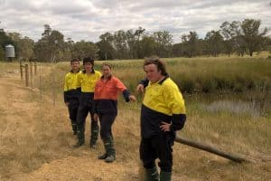 Fencing a wetland at Yea
