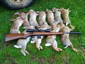Rabbit control methods