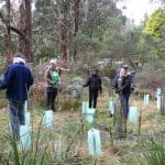 National Tree day at Kinglake West